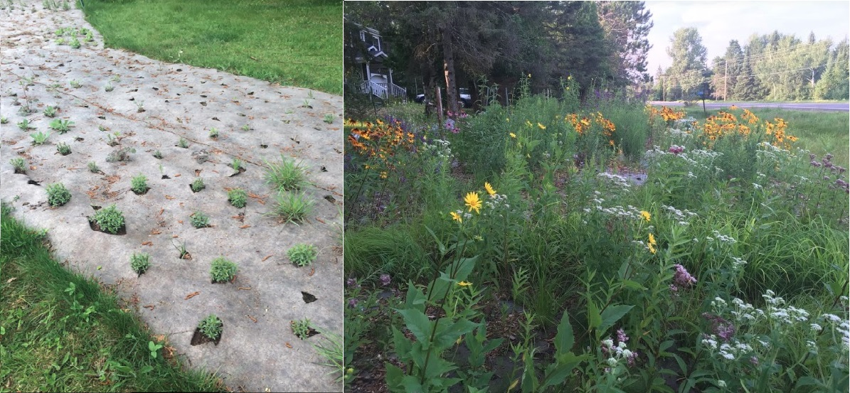 Image of Vegetation Establishment and Maintenance Suppression Mat Shortly after Installation (left side) One Year Later (right side)