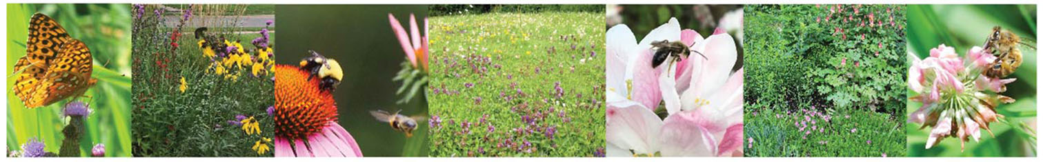 Series of images showing pollinators on flowers and lawns converted to pollinator habitat