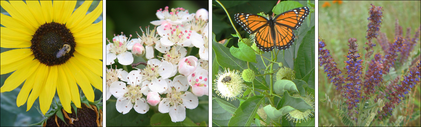 native plants photo banner
