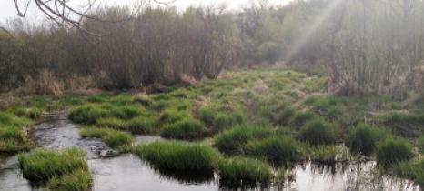Misty boggy area in Mille Lacs County within the Rum River watershed