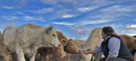 Jennifer Olson extends a hand to beef cattle in a pasture