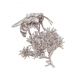 drawing of a bee on a flower