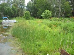 Image of Vegetation Establishment and Maintenance Stormwater Projects Emergent Plants