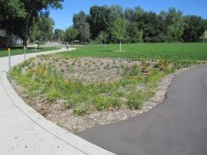 Image of Vegetation Establishment and Maintenance Stormwater Projects Grass Matrix