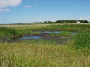 Vegetation Establishment and Maintenance Wetland Establishment Reseeding