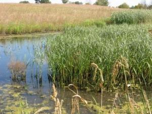 Vegetation Establishment and Maintenance Wetland Establishment Seedbank