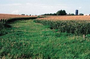 Surface Drainage Management