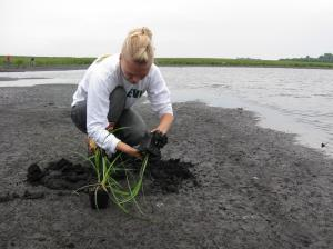 Installing containerized plants in a wetland