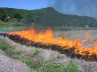 prescribed burning of buffer