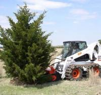 Tree removal with front end attachment on skid steer