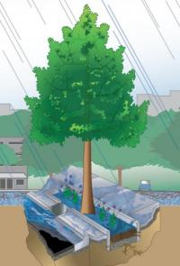 diagram of urban tree trench